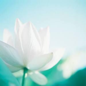 enoopoiisi_lotus
